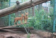 Гибель зоопарка «Мишутка»: что станет с животными после реконструкции «Швейцарии»?